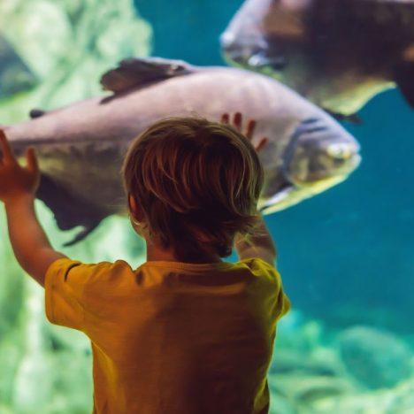 inspiracio-dubai-aquarium